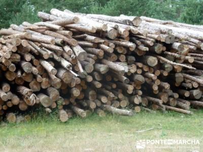 Apilamiento de madera - excursiones semana santa; nieve en la sierra de madrid